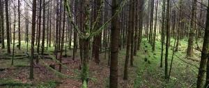 mitten zwischen den aufgereihten Bäumen
