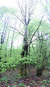 das ist so schön...hoffentlich sieht man es auf dem foto- die zwei bäume sind ineinander verschlungen